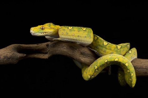 yellow_snake_stock_by_a68stock-d5kqb99
